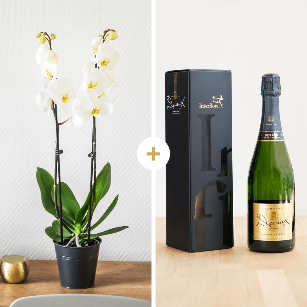 Candide et son champagne Devaux