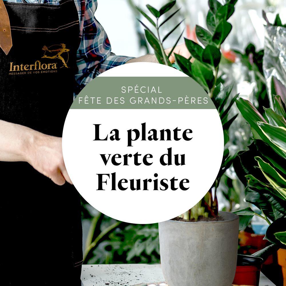 """Plante verte du fleuriste """"Spécial Fête des grands-pères"""""""