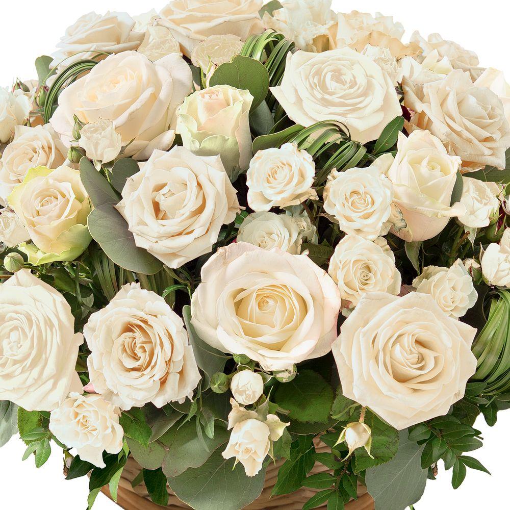 Rosae blanc