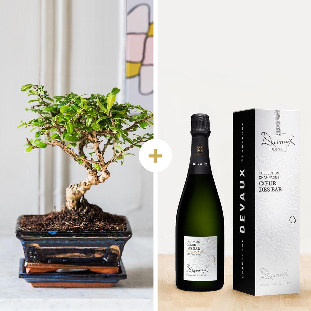 Bonsai et son champagne