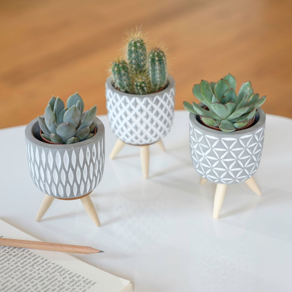 Trio de mini cactus et succulentes