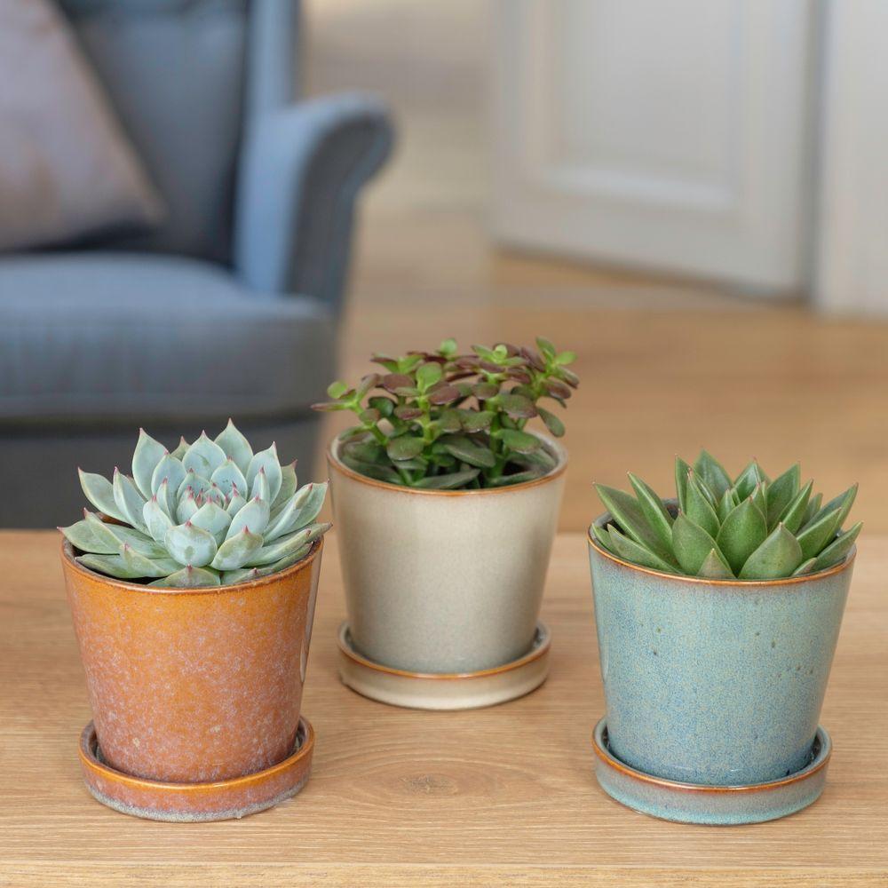 Trio de Succulentes et leurs cache-pots