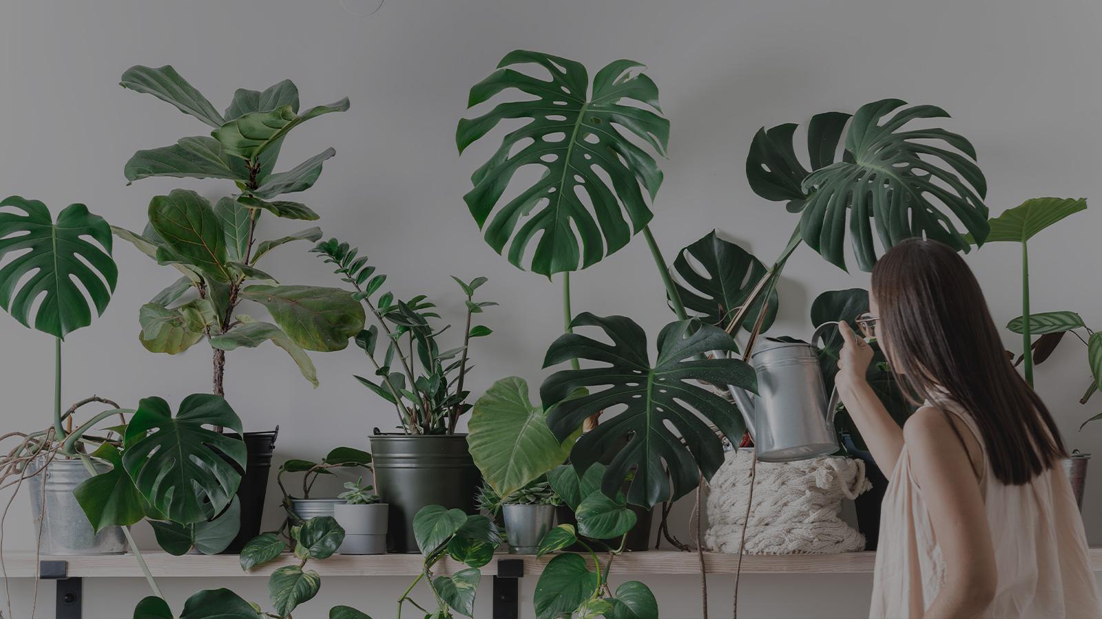 Green home : notre sélection de plantes