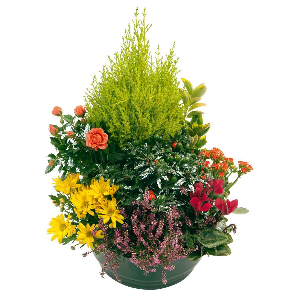 Coupe de plantes d'extérieur multicolores