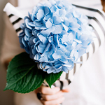 Langage des fleurs : le guide