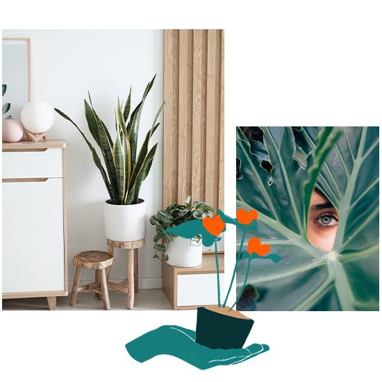 Avoir une plante verte chez soi, est le meilleur moyen de redonner vie à son intérieur. Des plantes vertes d'intérieur, des joliesfleurs en pot, un arbuste, il y a tant de façons différentes de végétaliser son appartement ou sa maison.