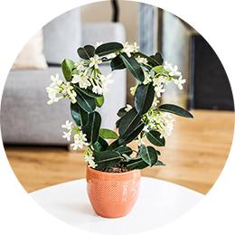 Les plantes fleuries