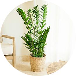 Les plantes vertes