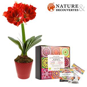 livraison fleurs envoi de fleurs fra ches domicile 7j. Black Bedroom Furniture Sets. Home Design Ideas
