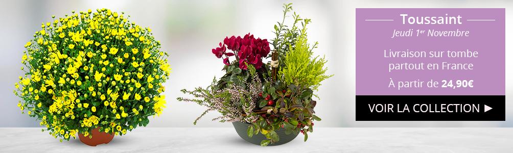 Découvrez nos fleurs et plantes pour la Toussaint