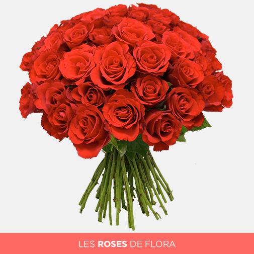 Un magnifique bouquet de roses rouges : les roses de l'amour