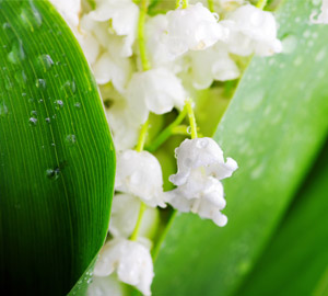Les fleurs du 1er Mai