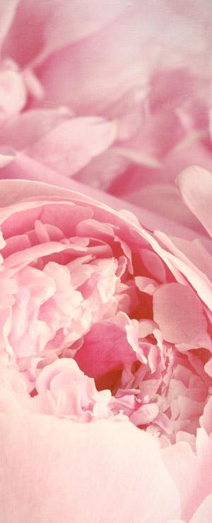 Les fleurs associées à la Fête des mères