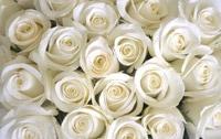 Les fleurs de la rencontre