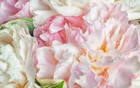 Les fleurs de l'engagement