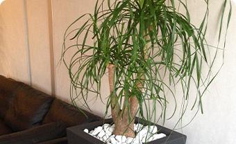 Location de plantes d'intérieur