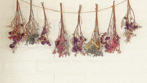 Fleurs en train de sécher sur un fil
