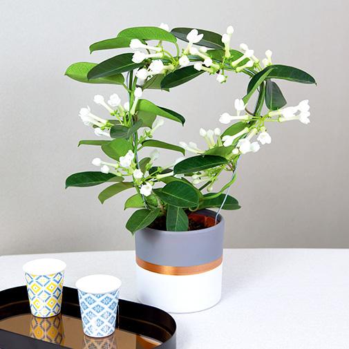 Je fais livrer une plante