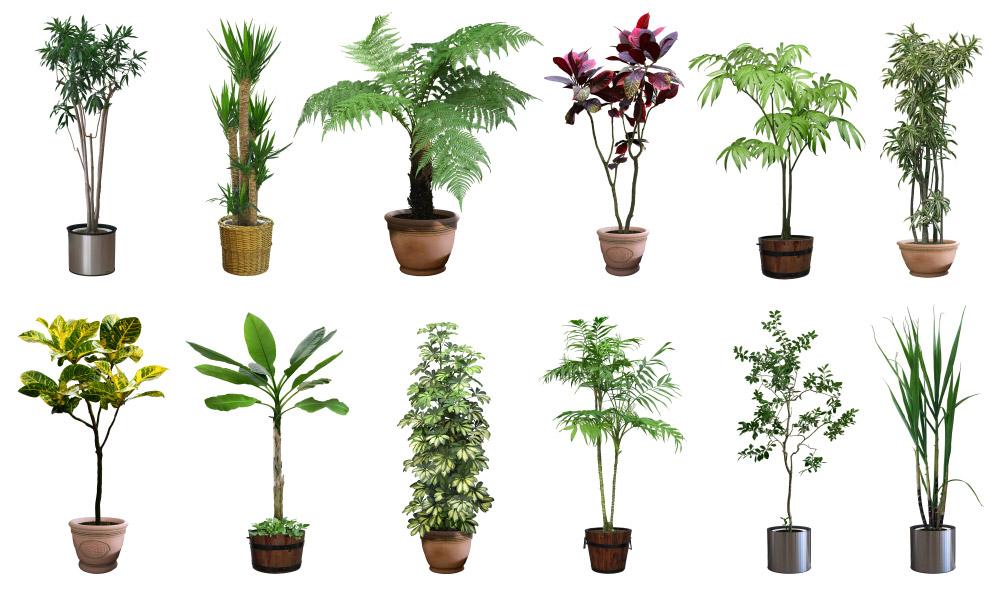plantes aromatiques et aux plantes ornementales