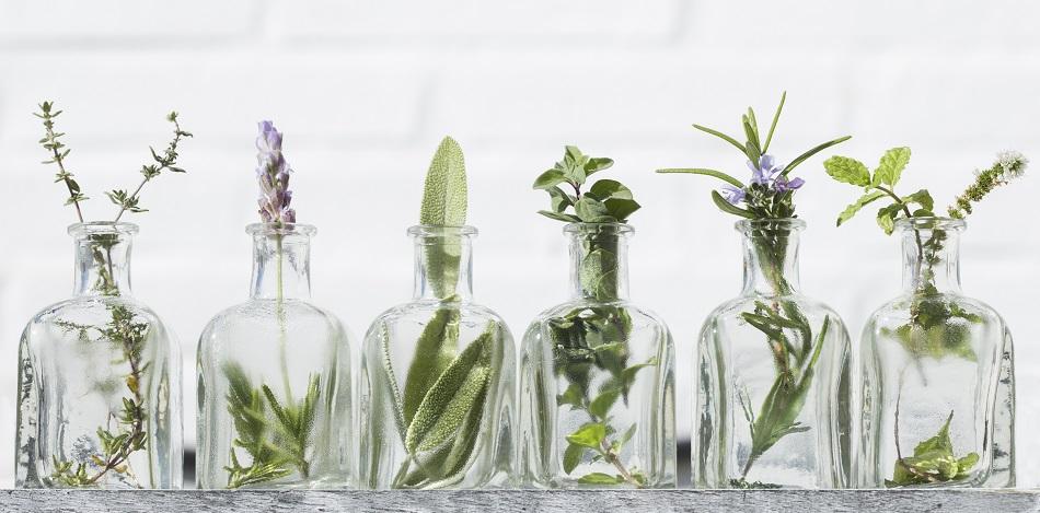 Les bonnes raisons d'avoir des plantes d'intérieur