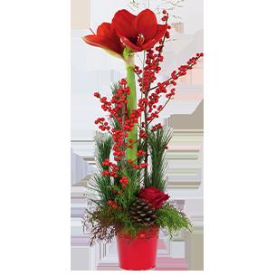 Bouquet de roses Sous le sapin