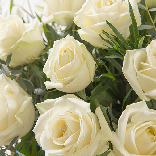 Bouquet de roses Alchimie