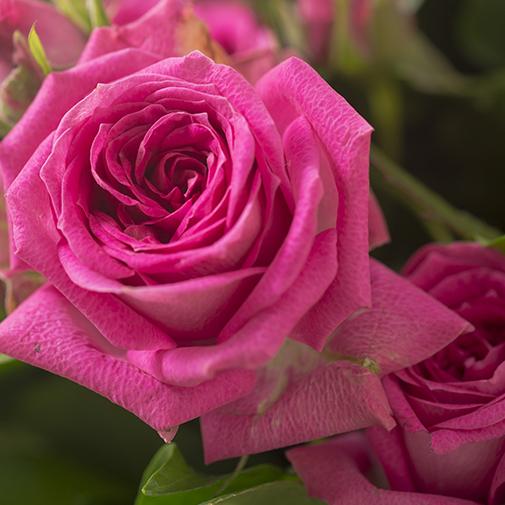 Bouquet de roses Fashion
