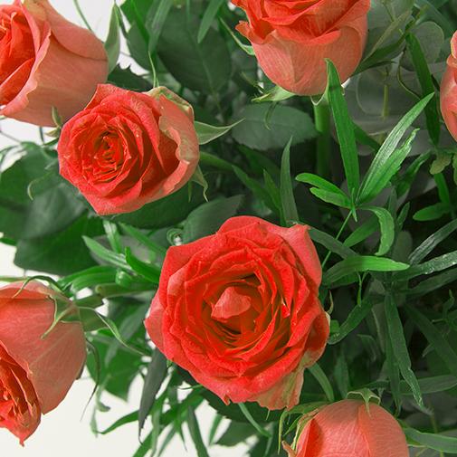 Bouquet de roses Glossy rouge