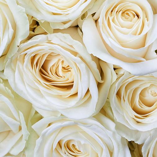 Bouquet de roses Idylle blanc