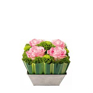 Ouate rose - interflora