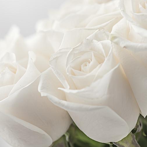 Bouquet de roses Passion blanc