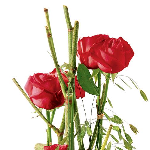 Bouquet de roses Plume rouge