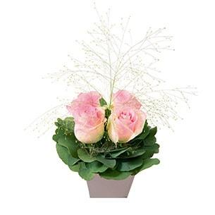 Poudre - interflora