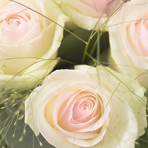 Bouquet de roses Poudré