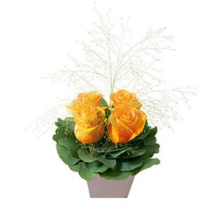 Poudre orange - interflora