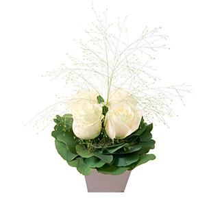 Poudre blanc - interflora