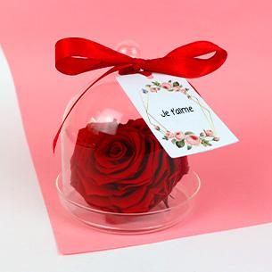 Fleurs et cadeaux Rose éternelle sous cloche