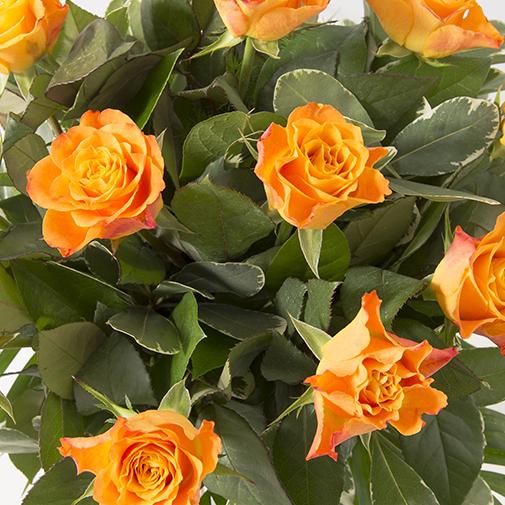 Bouquet de roses Tonic