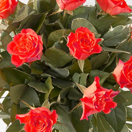 Bouquet de roses Tonic rouge