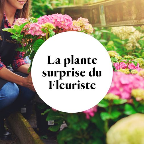 Bouquet de fleurs La plante fleurie du fleuriste