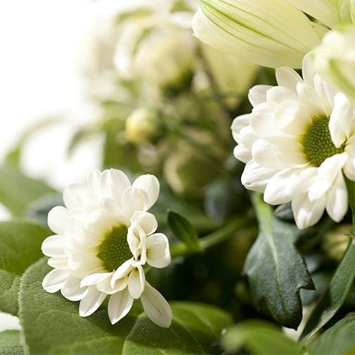 Fleurs et cadeaux Confidence et son écrin d'amandes gourmandes