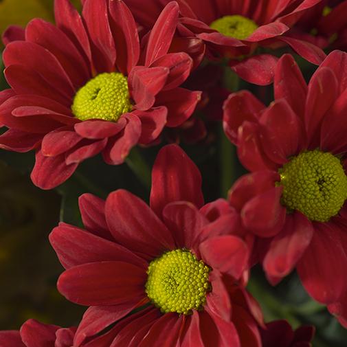 Bouquet de fleurs Souvenir et sa bulle d'eau