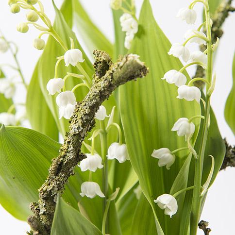 jardin de mini plantes avec muguet replanter interflora. Black Bedroom Furniture Sets. Home Design Ideas