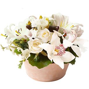 Ambre blanc - interflora