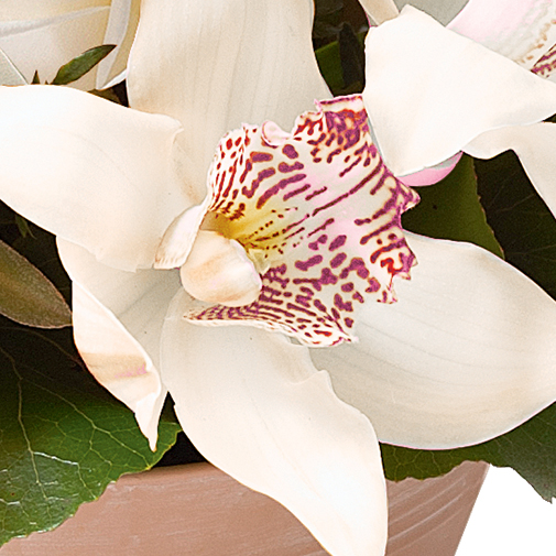 Composition florale Ambre blanc
