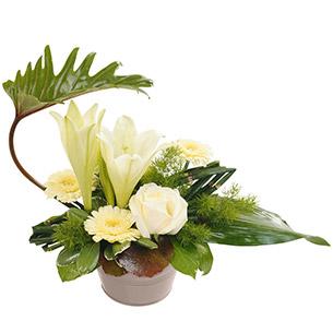 Composition florale composition de fleurs et plantes for Composition florale exterieur hiver