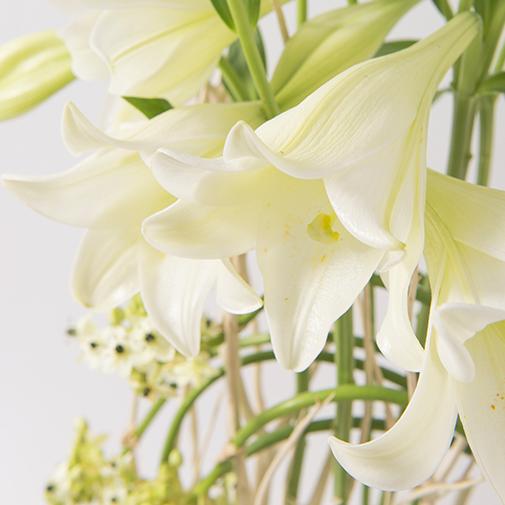 Composition florale Nacre