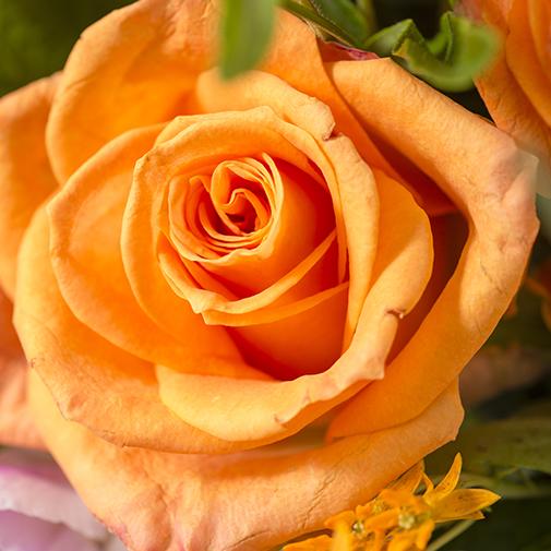 Composition florale Perroquet