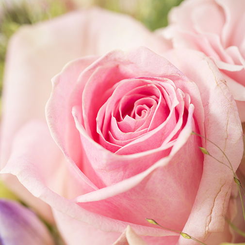 Fleurs et cadeaux Santorin et son écrin d'amandes gourmandes