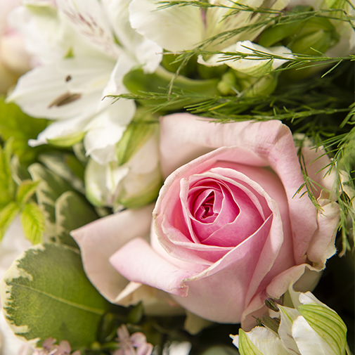 Composition florale Rose câlin